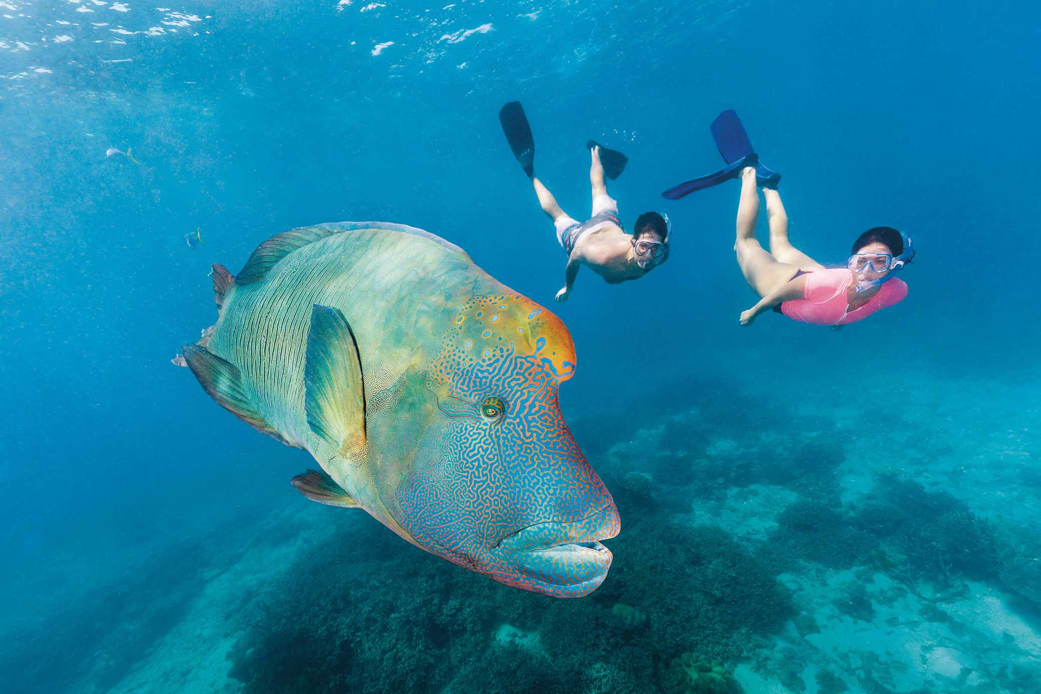 scuba diving at Great Barrier Reef